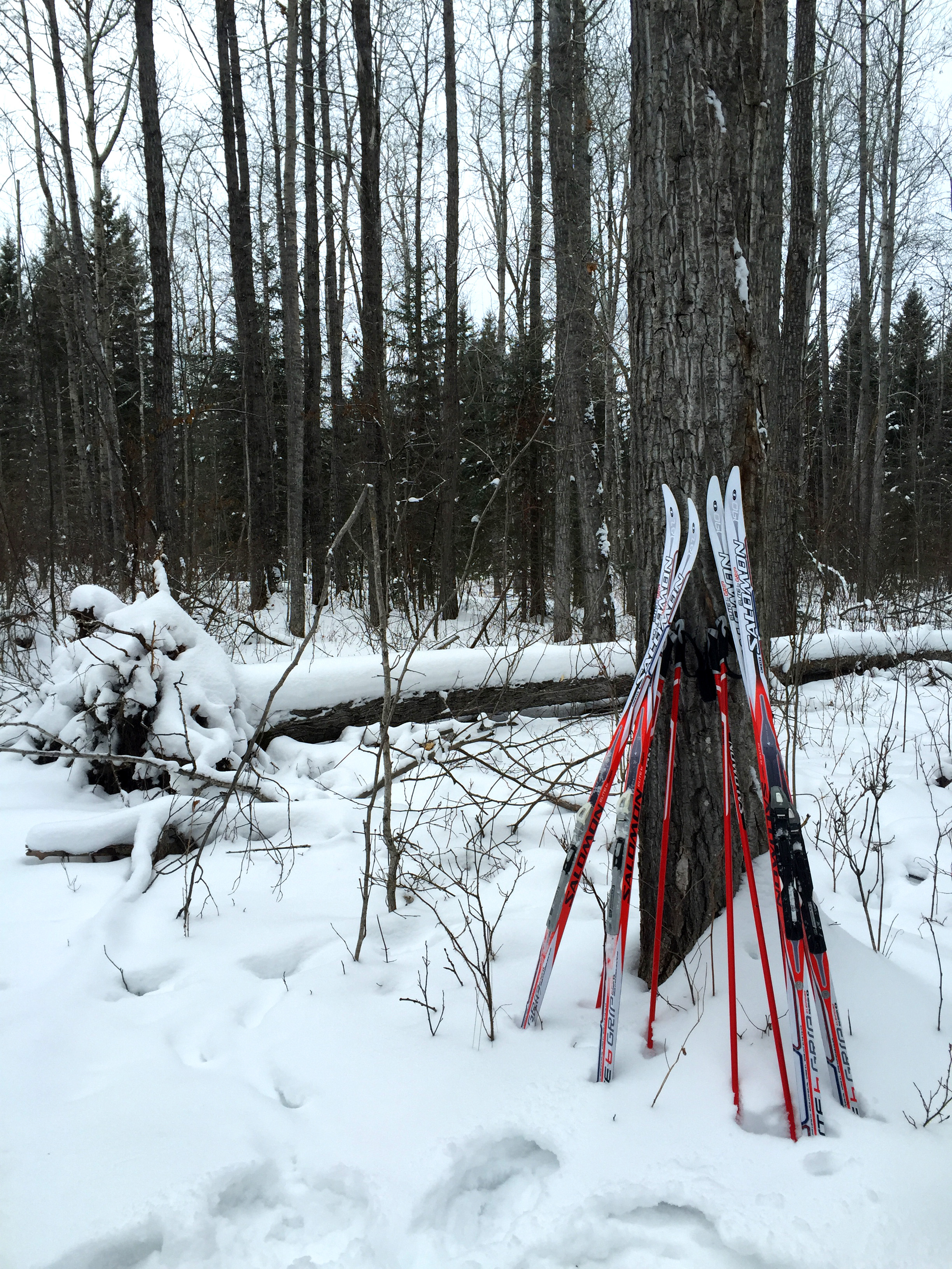 Meadow Lake Provincial Park Ski Trail