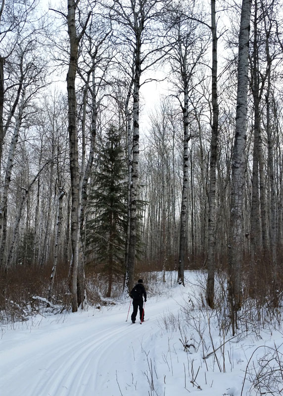 Meadow Lake Ski Trail