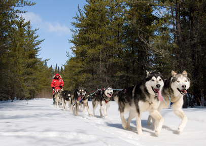 dog sled winter