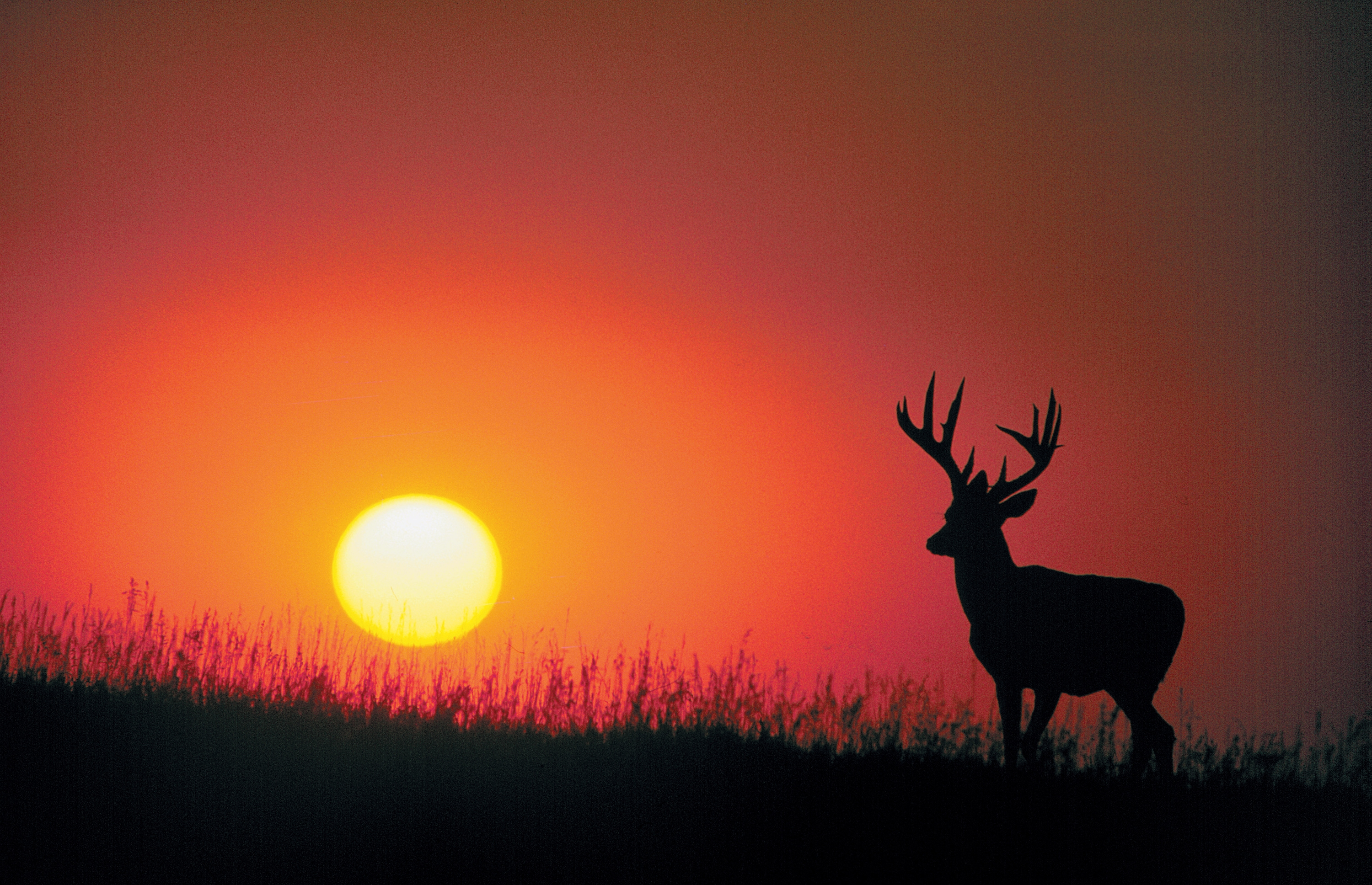 Deer Sunset Hunting Purchase A Licence
